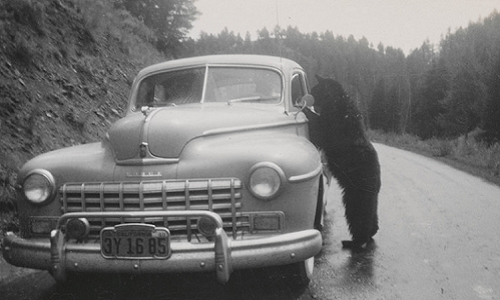 """Oh bother,"" said Pooh. ""I appear to have forgotten the keys. A Colorado man was surprised to discover a bear had opened his car's doors."